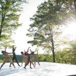 Behind-The-Scenes Dance Films | Jacob's Pillow Dance Festival